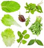 Ensemble de feuilles fraîches de laitue et de salade d'isolement photos stock