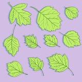Ensemble de feuilles linéaires de dessin Photos stock