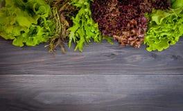 Ensemble de feuilles organiques fraîches de salade Photographie stock