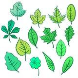 Ensemble de feuilles pour la conception sur un fond blanc Images libres de droits