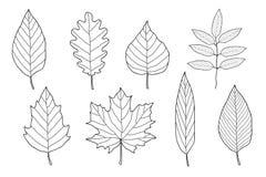 Ensemble de feuilles tirées par la main Photos libres de droits
