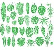Ensemble de feuilles tropicales de silhouettes Images libres de droits