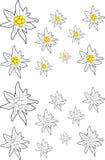 Ensemble de fleur d'edelweiss Photos libres de droits