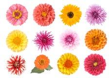 Ensemble de fleurs Photo libre de droits
