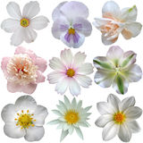 Ensemble de fleurs blanches de ressort Image libre de droits