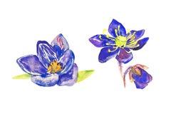 Ensemble de fleurs bleues largement ouvertes de crocus, d'isolement sur le blanc illustration stock