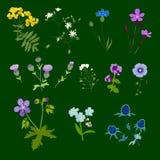Ensemble de fleurs de champ, illustration de vecteur Photographie stock