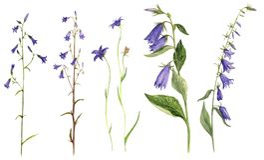 Ensemble de fleurs de cloche de dessin d'aquarelle illustration stock