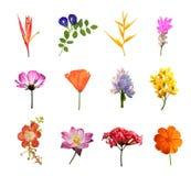 Ensemble de fleurs d'isolement Images libres de droits