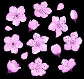 Ensemble de fleurs de cerisier Photo stock