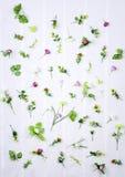 Ensemble de fleurs de ressort sur le fond blanc Images stock