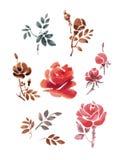 Ensemble de fleurs et de feuilles d'aquarelle Roses sur un fond blanc Photo stock