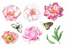 Ensemble de fleurs et de guindineaux Photographie stock libre de droits