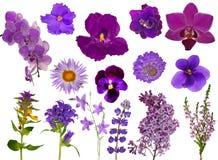 Ensemble de fleurs lilas de couleur d'isolement sur le blanc Image stock