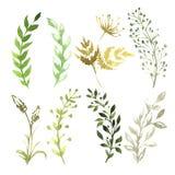 Ensemble de fleurs peintes dans l'aquarelle sur le blanc Photo stock