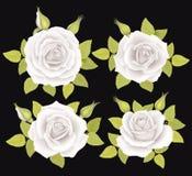 Ensemble de fleurs de roses Illustration de vecteur Photo stock
