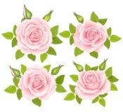 Ensemble de fleurs de roses Illustration de vecteur Images libres de droits