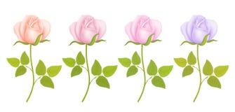 Ensemble de fleurs de roses Illustration de vecteur Image stock