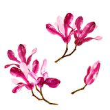 Ensemble de fleurs rouges de magnolia d'aquarelle Image libre de droits