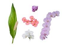 Ensemble de fleurs sur le blanc 2 Image libre de droits
