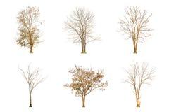 Ensemble de forme d'arbre et de branche d'arbre sèches sur le fond blanc pour d'isolement Image libre de droits