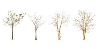 Ensemble de forme d'arbre et de branche d'arbre sèches sur le fond blanc pour d'isolement Photos libres de droits