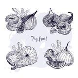 Ensemble de fruit différent de figue Fruits frais et secs, feuille, tranches Illustration tirée par la main de vecteur noir et bl Illustration Libre de Droits