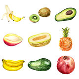 Ensemble de fruits tropicaux Photographie stock libre de droits