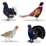 Ensemble de gibier à plumes illustration libre de droits