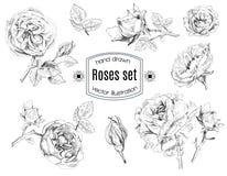 Ensemble de graphique de Rose illustration stock