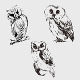 Ensemble de hibou Croquis de vecteur Attraction de main Photo stock