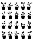 Ensemble de jeunes plantes plantées dans la terre graphismes Illustration de vecteur sur le fond blanc Images libres de droits