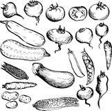 Ensemble de légumes de dessin Images libres de droits