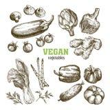 Ensemble de légumes Moisson illustration libre de droits