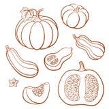 Ensemble de légumes Potirons et courgette illustration stock