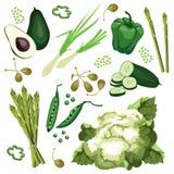 Ensemble de légumes verts mûrs Avocat, concombre, oignon vert Photos libres de droits
