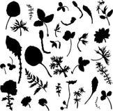 Ensemble de la silhouette s d'herbes et de feuilles Photos libres de droits
