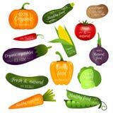 Ensemble de labels de légumes avec le texte témoin Collection de réaliste Images stock