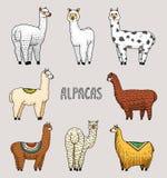 Ensemble de lamas mignons d'alpaga ou de guanaco sauvage sur le fond du cactus et de la montagne Animaux de sourire drôles au Pér Photos libres de droits