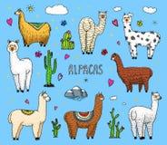 Ensemble de lamas mignons d'alpaga ou de guanaco sauvage sur le fond du cactus et de la montagne Animaux de sourire drôles au Pér Photographie stock libre de droits