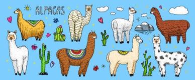 Ensemble de lamas mignons d'alpaga ou de guanaco sauvage sur le fond du cactus et de la montagne Animaux de sourire drôles au Pér Images libres de droits