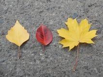 Ensemble de lames d'automne Image libre de droits