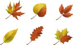 Ensemble de lames d'automne Images stock