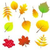 Ensemble de lames d'automne colorées Sur le fond blanc Images libres de droits