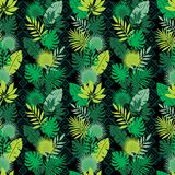 Ensemble de lames tropicales Feuillage de jungle Images stock