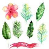 Ensemble de lames tropicales Illustration tirée par la main de feuilles dans l'aquarelle Photographie stock libre de droits