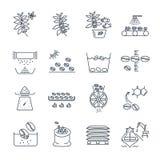Ensemble de ligne mince production de café d'icônes illustration de vecteur