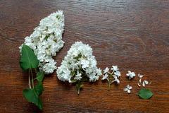 Ensemble de lilas entier et divisé en deux avec des feuilles Chemins de coupure Photo stock