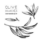 Ensemble de logo tiré par la main de branche d'olivier de vecteur Photographie stock