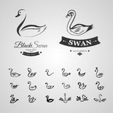 Ensemble de logo tiré par la main de 20 croquis de cygne noir d'isolement sur le fond blanc Photos stock